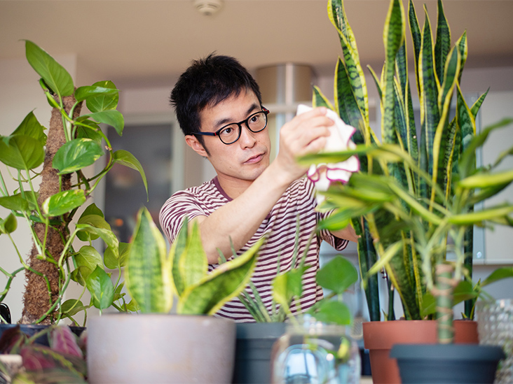 Reasons Why You Need House Plants in Your Home!