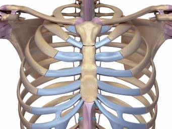Causes the what sternum pop 😱 to Pain at